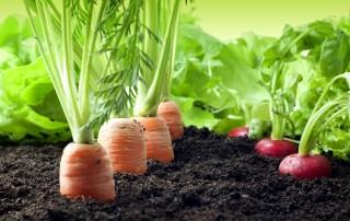 Finanziamenti agevolati giovani agricoltori