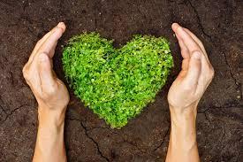 cuore di erba